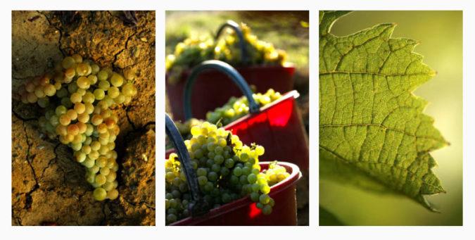 wine experience la scolca